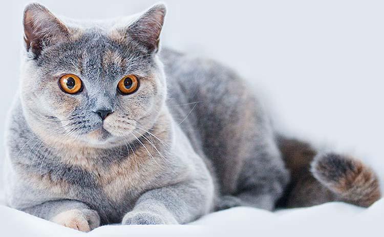 Photo of Как заработать на продаже породистых кошек
