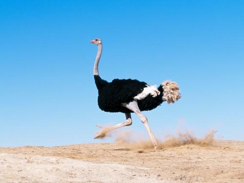 Photo of Как начать разведение страусов в домашних условиях