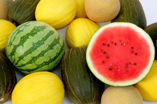 Photo of Как вырастить арбузы и заработать на них в летнее время