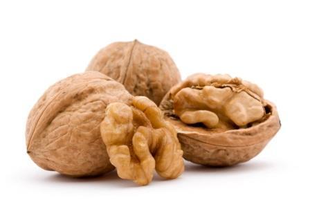 Как правильно построить бизнес на грецких орехах, переработка, закупка