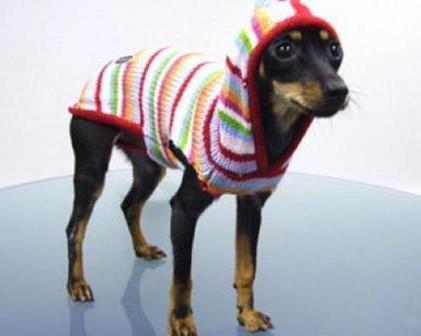Photo of Бизнес идея: пошив одежды для животных
