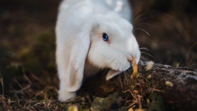 Photo of Что нужно для разведения кроликов?