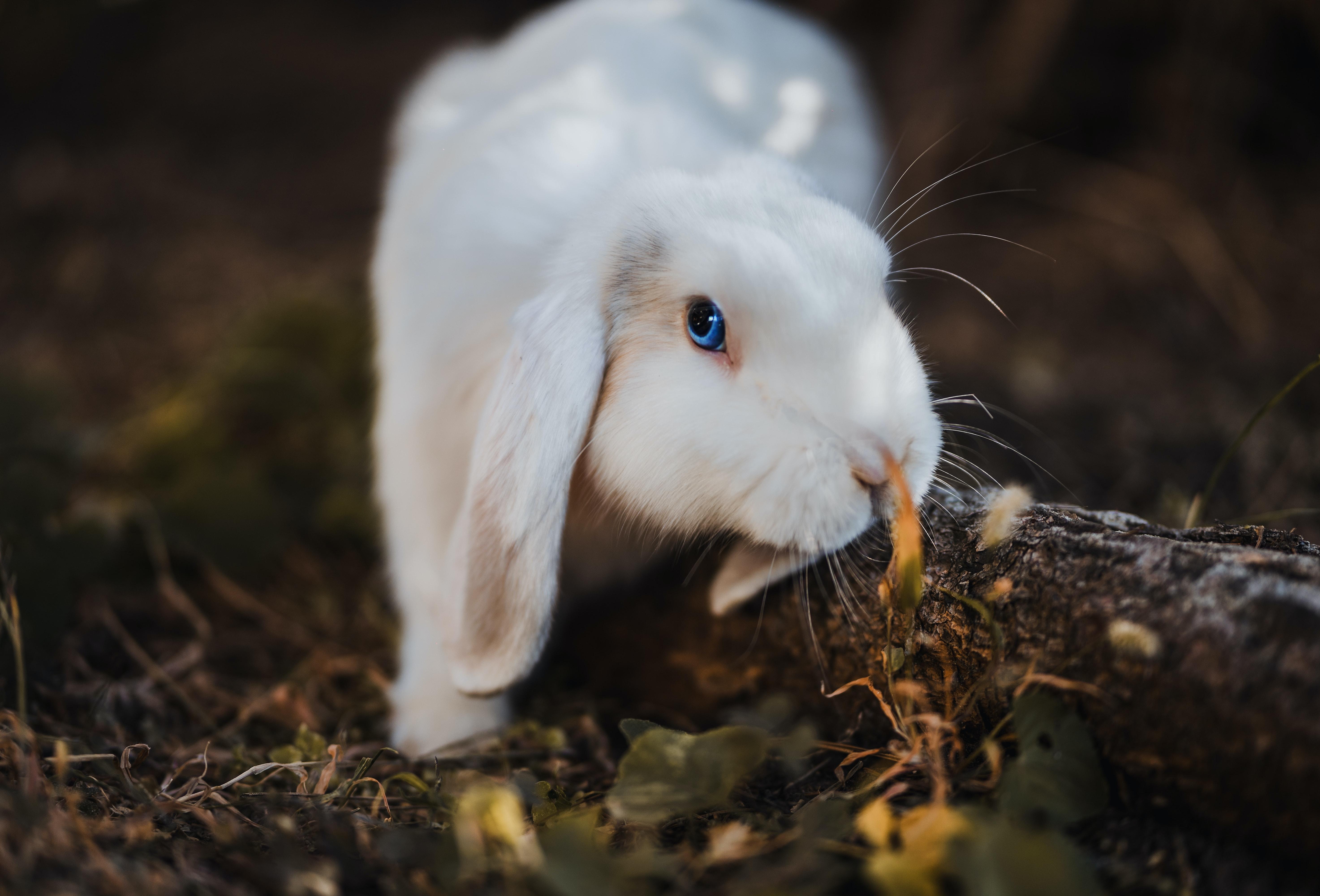 Что нужно для разведения кроликов?