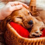 Идея для бизнеса – гостиницы для животных