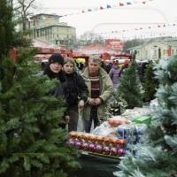 Photo of Предновогодняя продажа елок