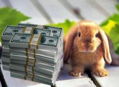 Photo of Разведение кроликов, бизнес идея