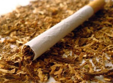 Photo of Выращивание табака курительного как бизнес